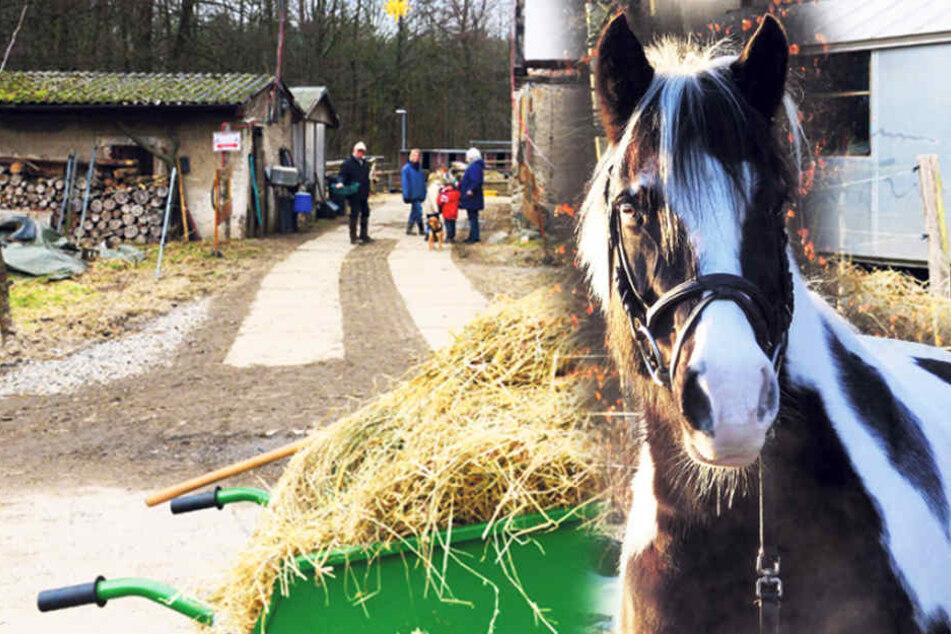 """Pferde-Drama auf der Hofewiese: Beliebtes Pony """"Kelly"""" ist tot!"""