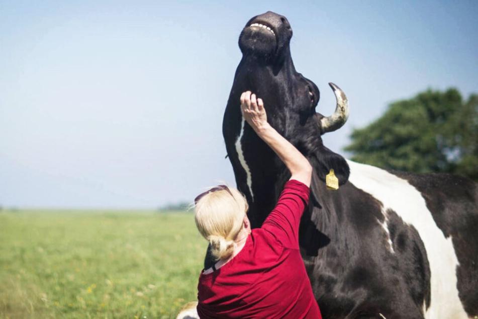 """Karin Mück krault einer Kuh den Hals, was diese liebt und ähnlich wie eine Katze """"schnurrt""""."""