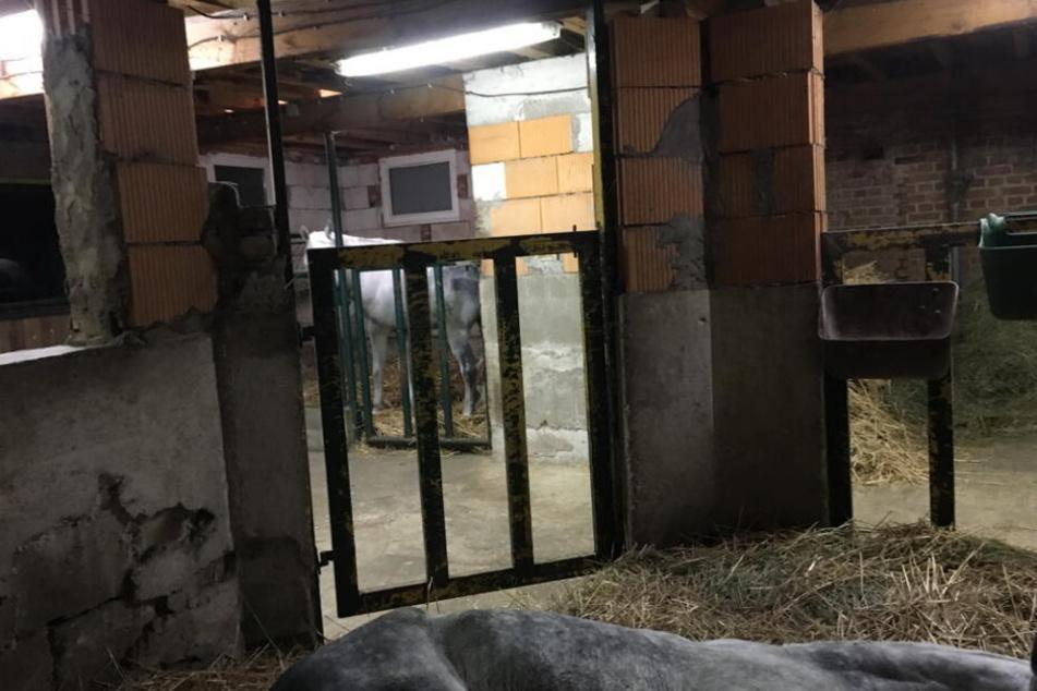Tierschützer deckten eine scheußliche Tierquälerei in Lützen bei Leipzig auf.