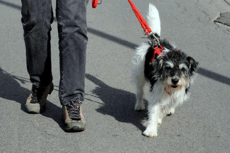 Vom Gewalt-Täter, der den Hund attackierte, fehlt bislang jede Spur. (Symbolbild)