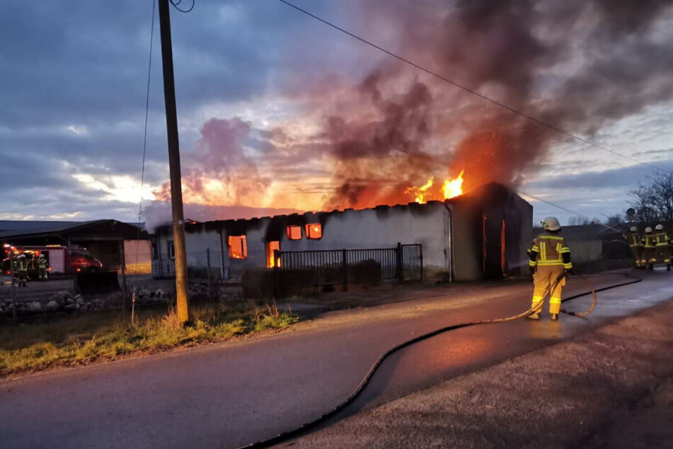 Der Rinderstall stand in Flammen.