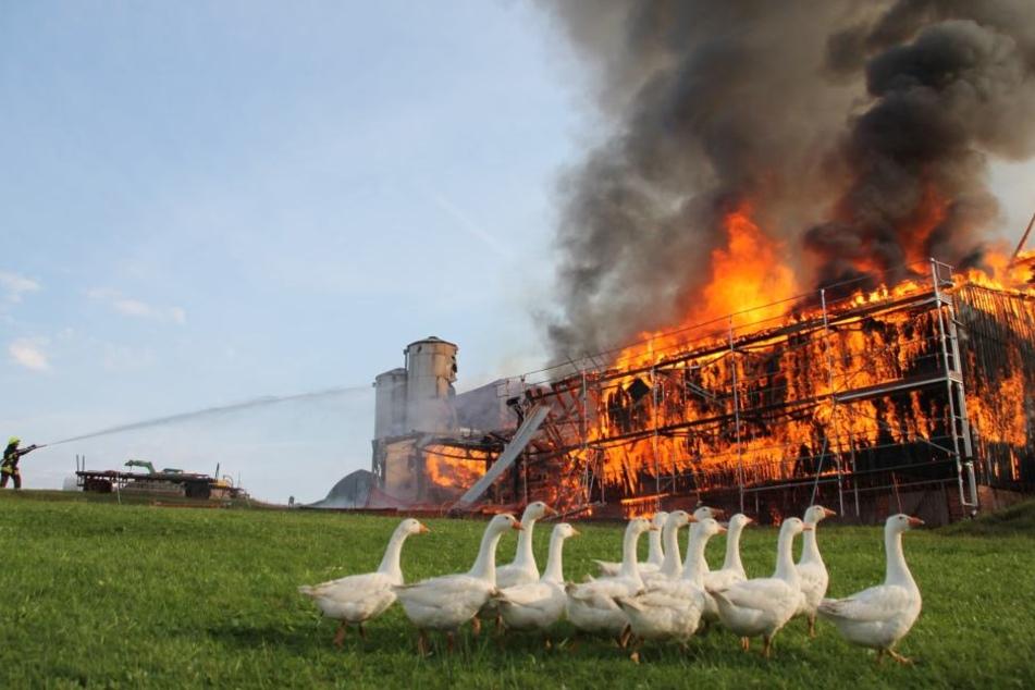 Die Scheune ging komplett in Flammen auf.