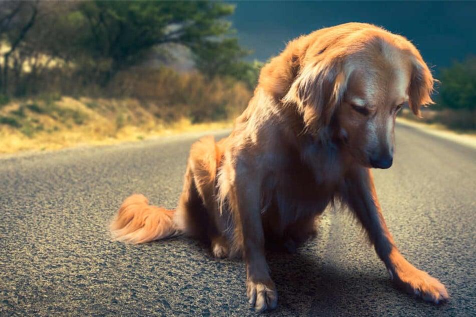 """Für viele Menschen sind Hunde der """"beste Freund"""", doch einige Wenige hassen die Tiere regelrecht."""