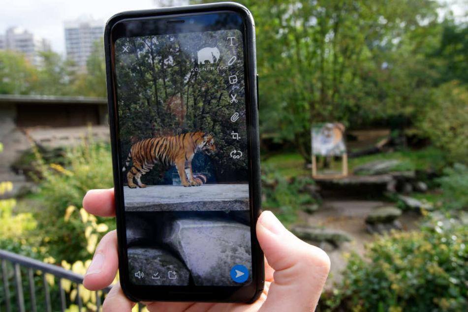 Ein digitaler Tiger wird auf dem Handy angezeigt.
