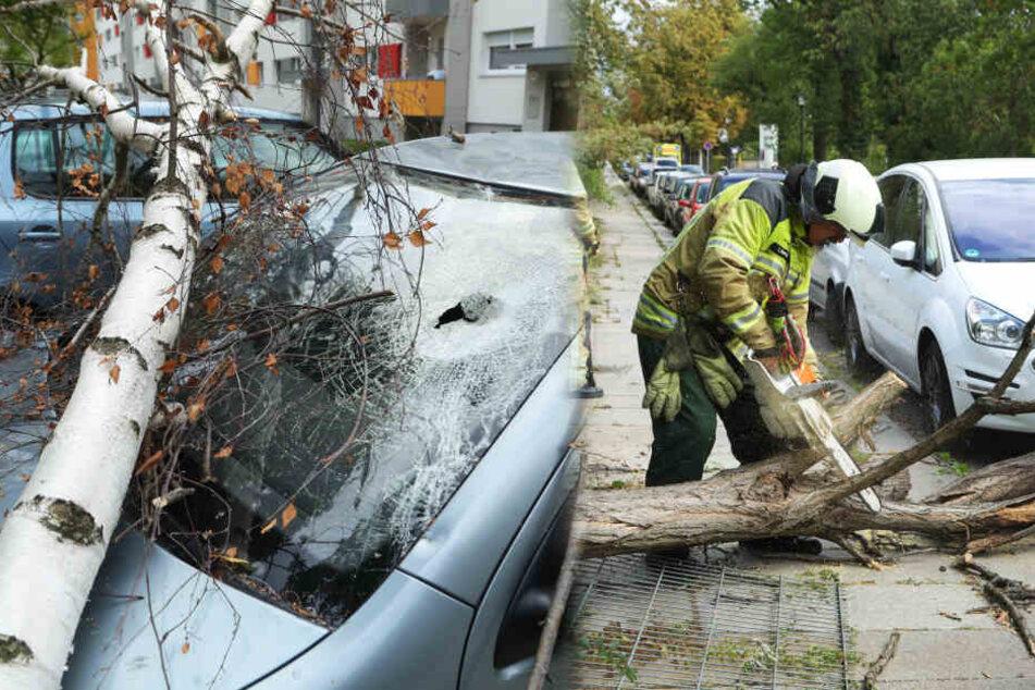 Mortimer sorgt in Dresden und Umgebung für dutzende Sturmeinsätze