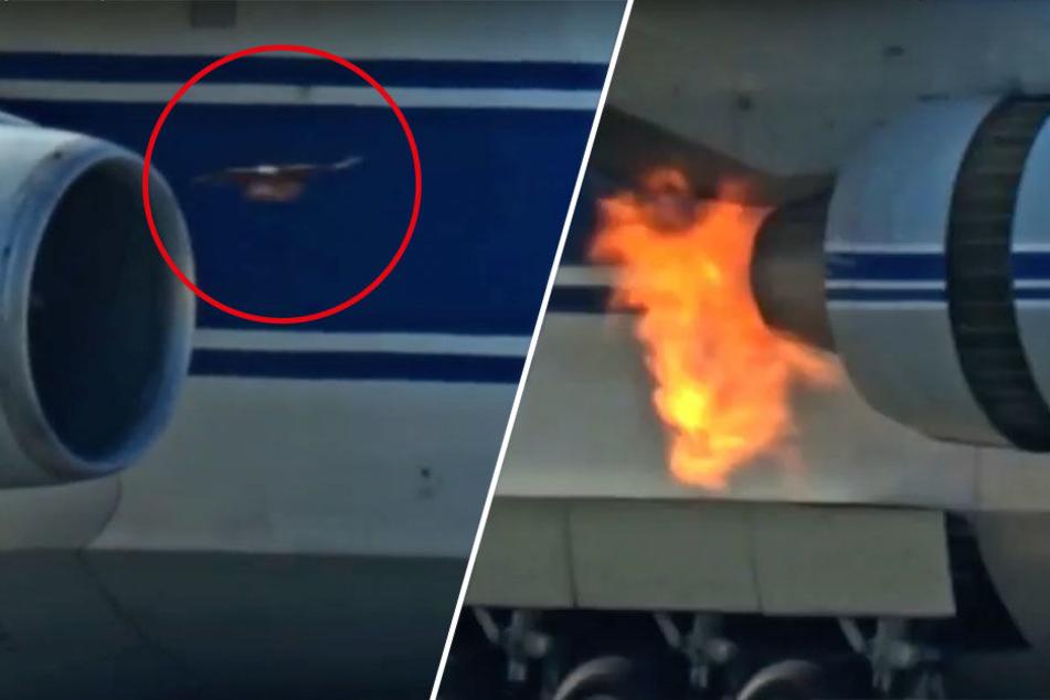 In Leipzig/Halle: Hier wird ein Vogel in einer Antonow-Turbine gegrillt