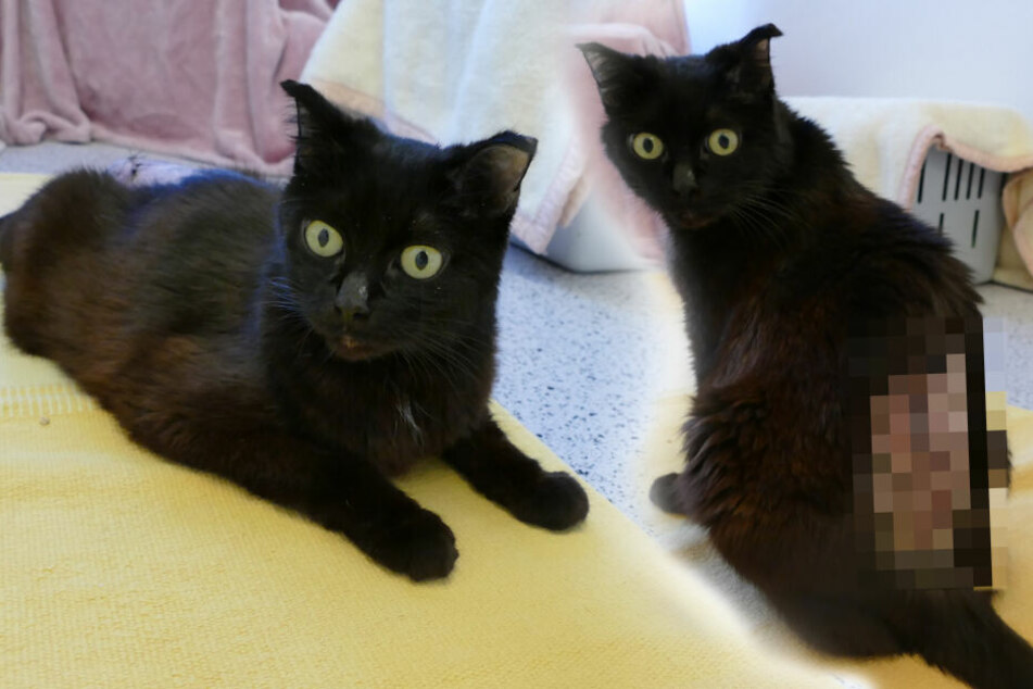 Lucifers traurige Geschichte: Diese schwarze Katze hat einfach nur Pech