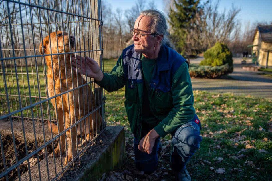 Tierheim-Chef Jens von Lienen (60) nutzt das Internet um Frauchen und Herrchen gefundener Hunde zu suchen.