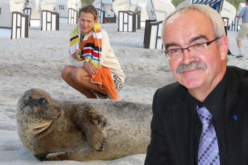 Der Europaabgeordnete Werner Kuhn (63, CDU) will Robben notfalls abschießen lassen. (Bildmontage)