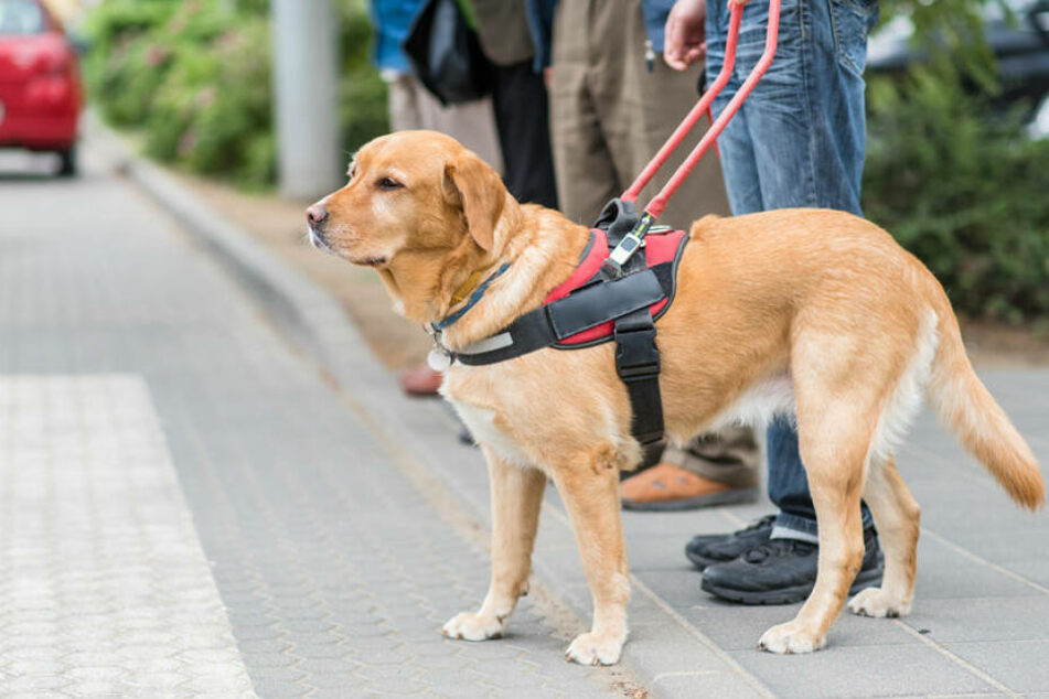 Der Fahrer hatte Angst, dass der Blindenhund seine Ledersitze beschädigt. (Symbolbild)