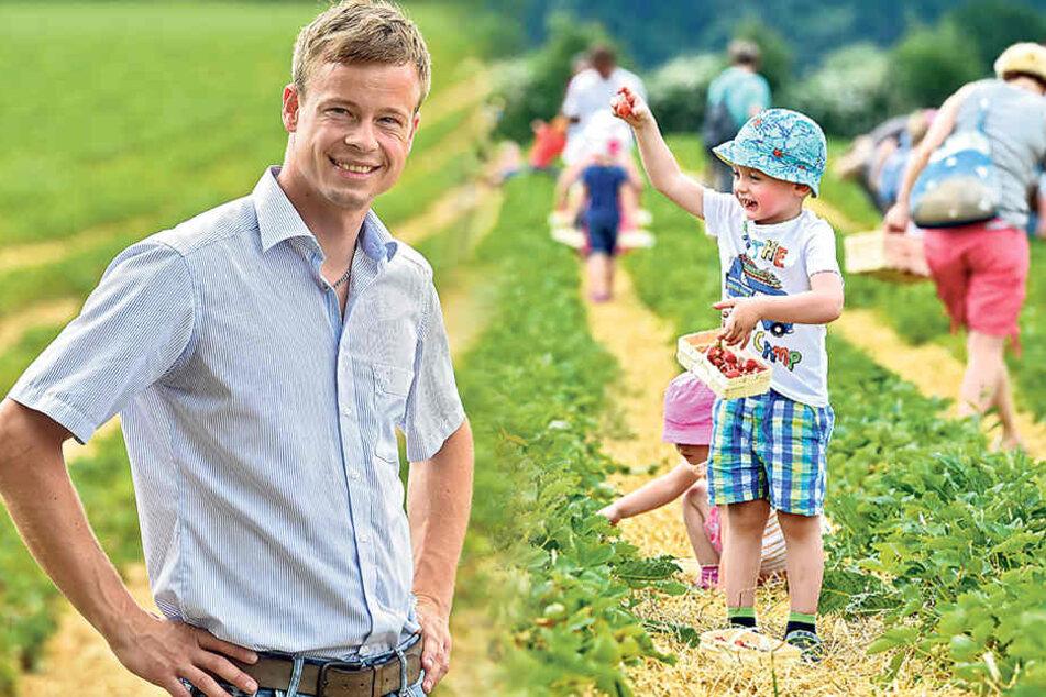 Erste (teure) Sachsen-Früchtchen sind reif für die Ernte