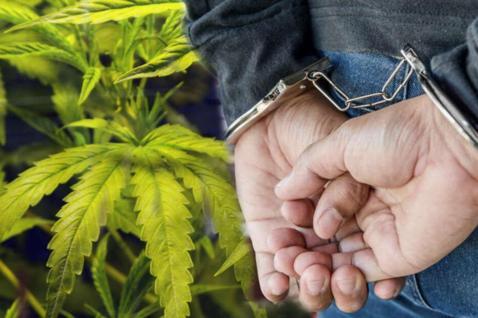 29 Kilogramm Marihuana stellten die Beamten sicher.