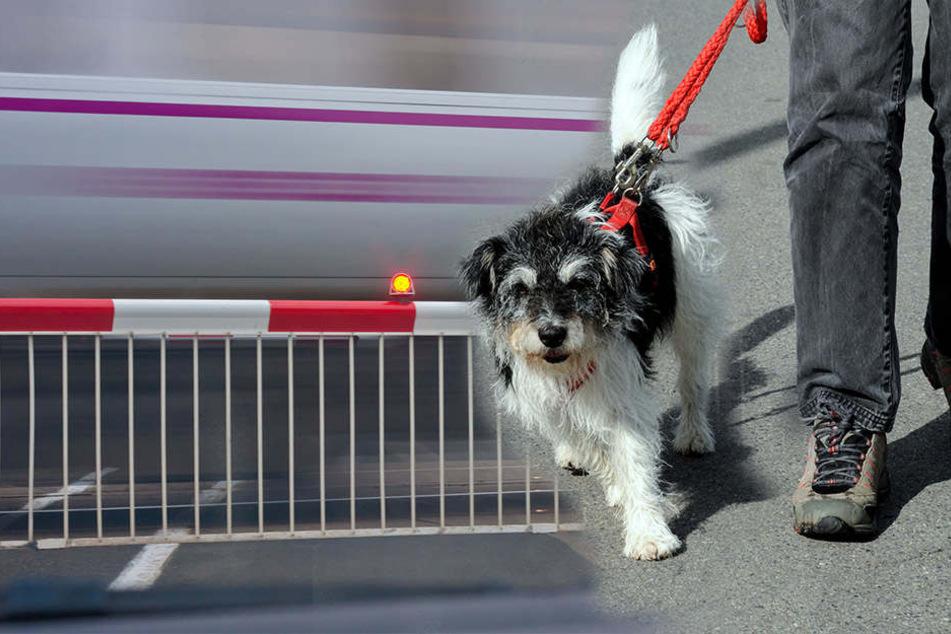 Trotz geschlossener Schranke führte der Mann seinen Hund Gassi auf den Schienen. (Symbolbild)