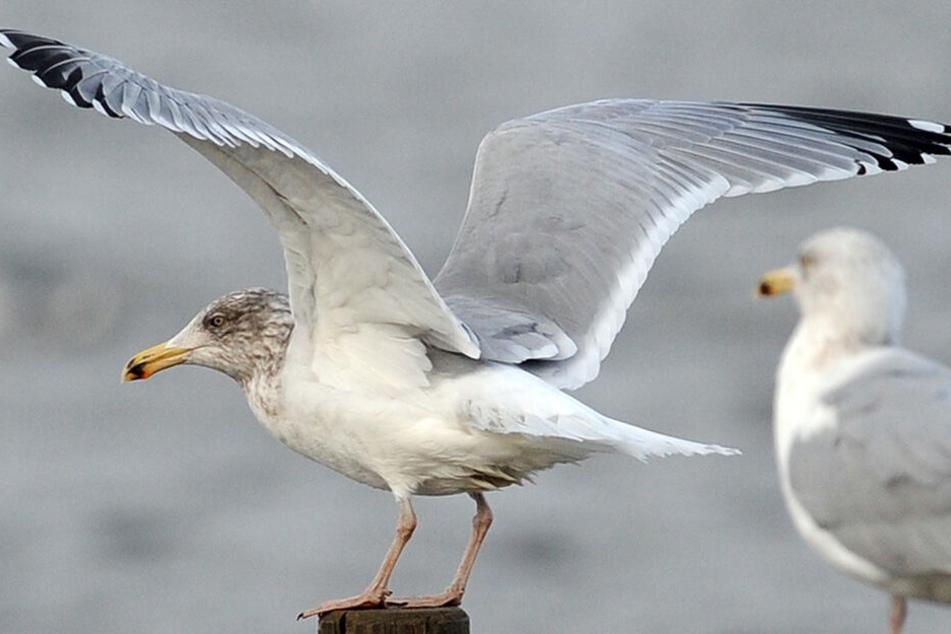 Besonders See- und Wasservögel sind betroffen.