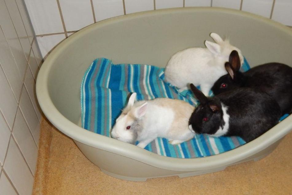 Die Kaninchen wurden anschließend in einer warmen Sammelbox ins Tierheim gebracht.