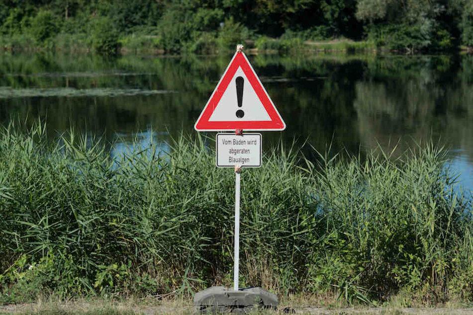 Wegen Blaualgen sollte man so manches Gewässer in Berlin und Brandenburg meiden.