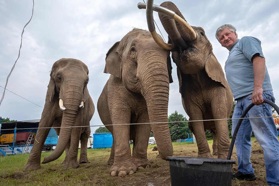 """Tierquälerei? Tierschützer sorgen sich um Elefanten im """"Circus Afrika"""""""