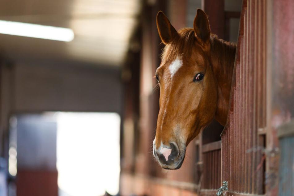 Während der Attacke stand das wehrlose Pferd in der Box. (Symbolbild)