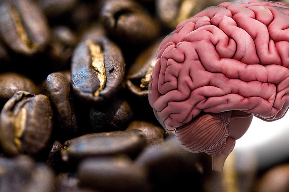 Gesünder als gedacht: Kaffee schützt unser Gehirn vor schweren Erkrankungen