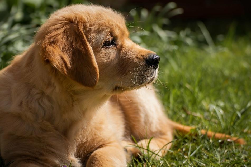 Durchfall bei Hunden? Die Sofort-Lösung gibt's in der Apotheke