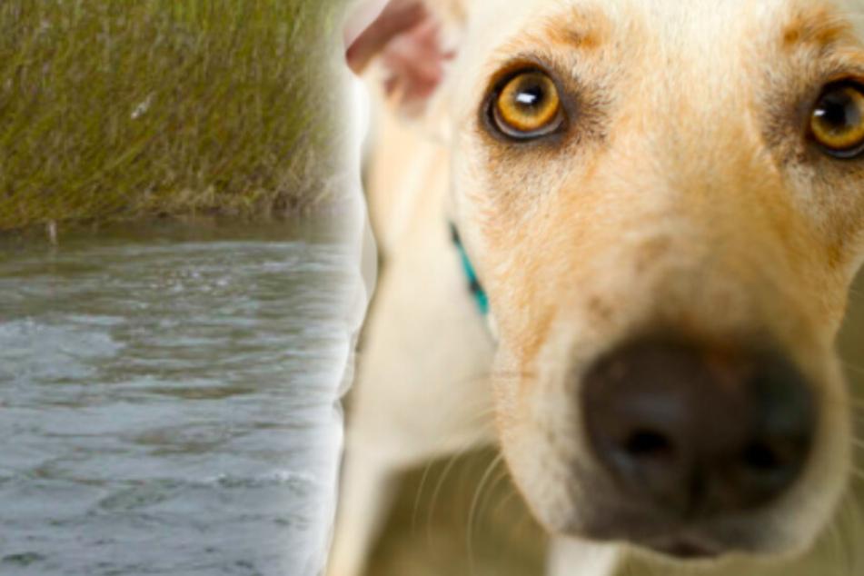Polizisten retten Hund an Heiligabend vor dem Ertrinken aus eiskaltem Kanal
