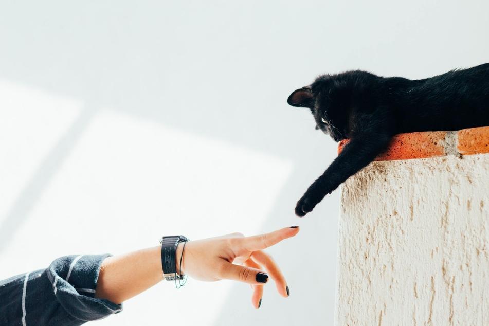 Katzen sollten nicht daran gewöhnt werden, dass es okay ist, nach Händen zu kratzen oder zu beißen.