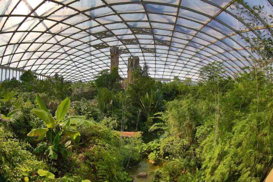 Das beeindruckende Gondwanaland - ein Regenwald-Nachbau - ist einer der großen Hingucker im Leipziger Zoo.