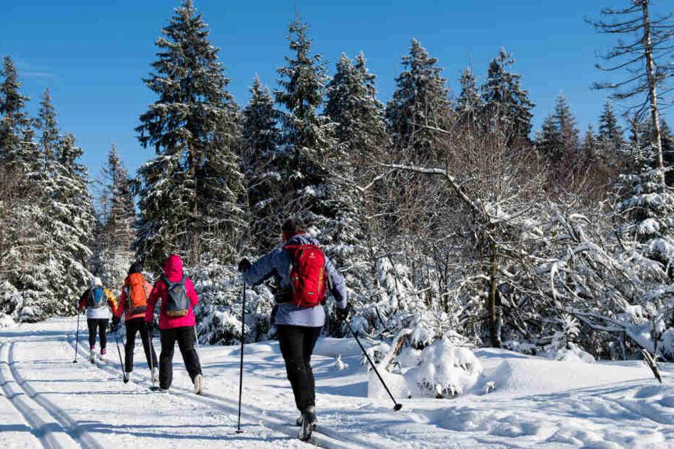 Zahlreiche Loipen in den sächsischen Wintersportgebieten sind derzeit nur eingeschränkt befahrbar.