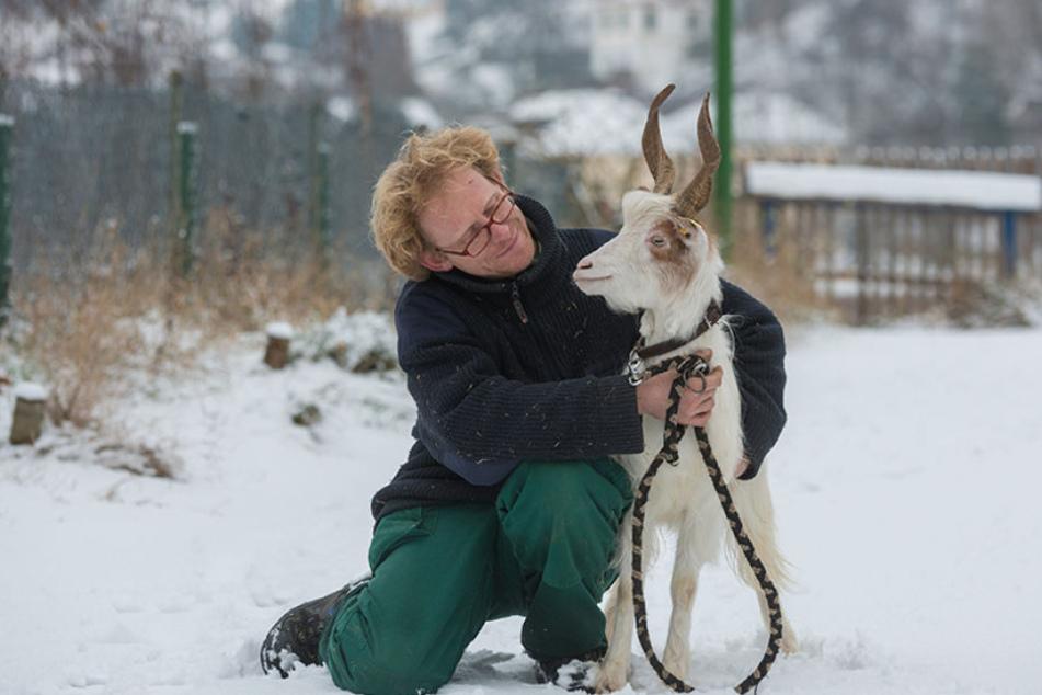 Sven Näther (41) bewahrt Nutztiere vorm Aussterben. Die Girgentana-Ziege  gehört zu den seltensten Arten weltweit.