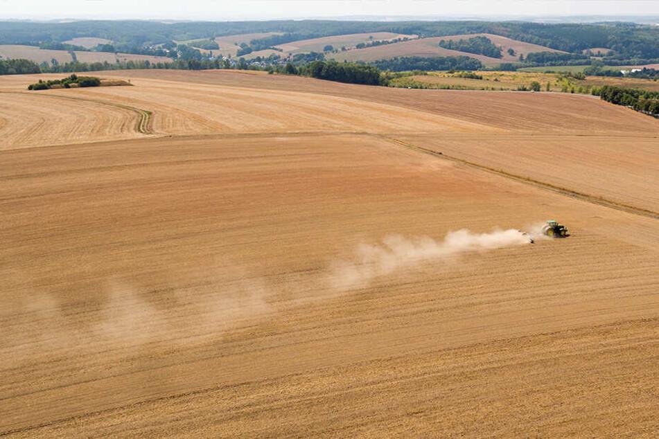 Im April fehlten 98 Prozent Niederschläge! Sachsen droht nächster Dürre-Sommer