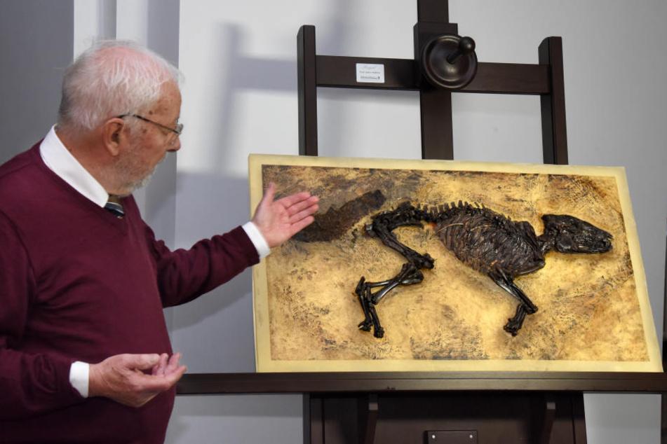 Die Urpferdchen können im Hessischen Landesmuseum betrachtet werden.