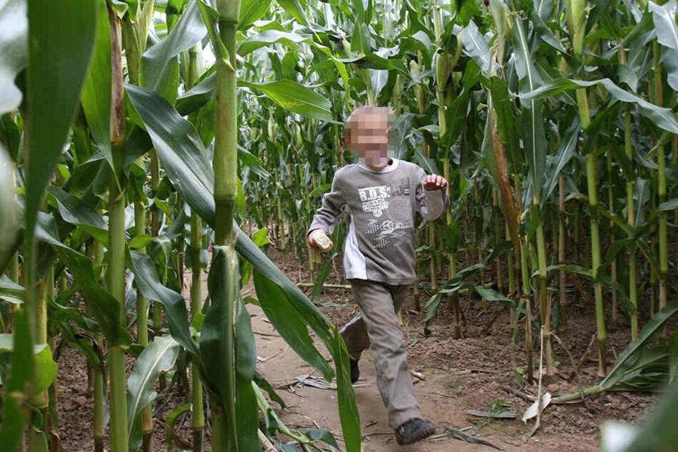 Ein Dreijähriger wurde jetzt von seinen Eltern in einem Maislabyrinth vergessen. (Symbolbild)