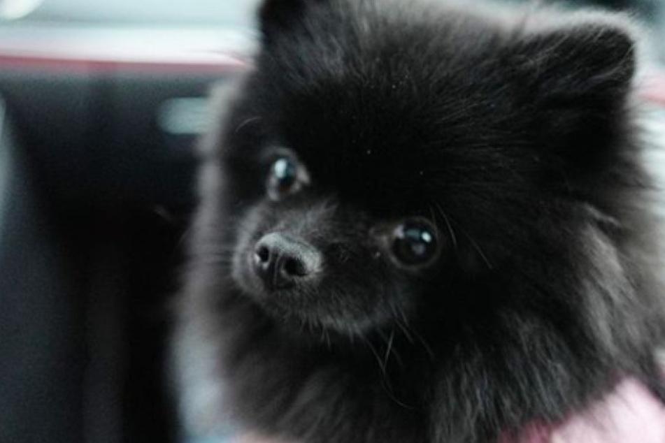 Dieser süße Hund hat ein echtes Promi-Geheimnis