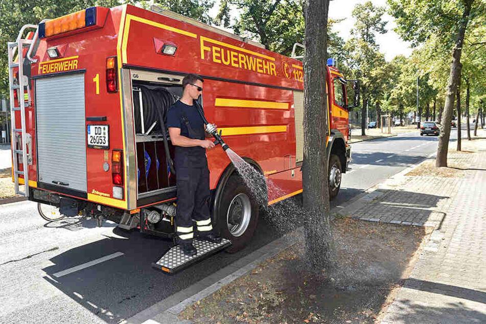 Schon im letzten Jahr half die Feuerwehr beim Gießen. Längst haben die Bäume wieder Durst.