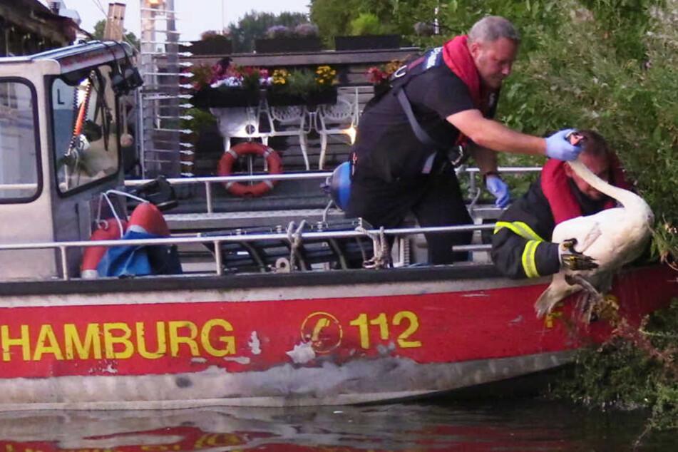 Die Feuerwehr rettet einen entkräfteten Schwan aus der Alster.
