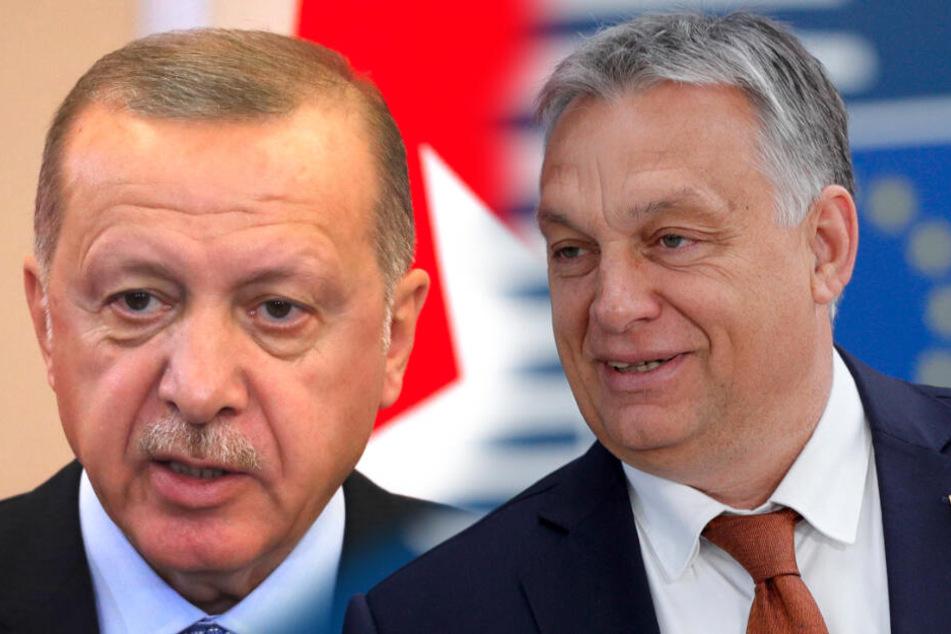 Orban lobt Erdogans Krieg und regt EU-Gelder für die Türkei an