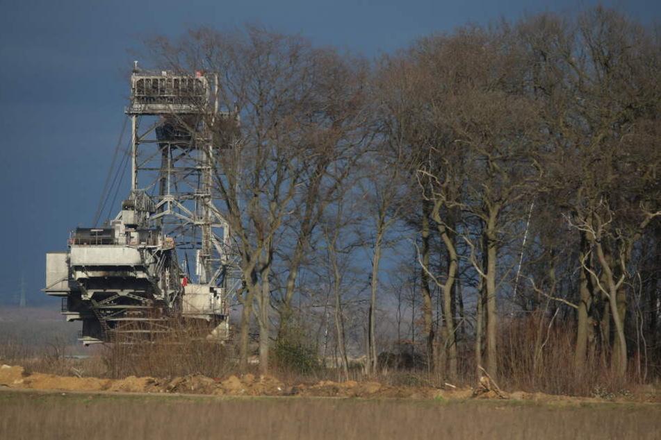 Der Hambacher Forst soll offiziell erhalten bleiben. Das ist eine Kehrtwende in dem jahrelangen Streit zwischen RWE und Aktivisten.