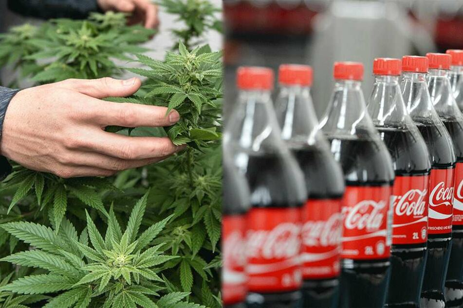 Kommt bald die Cannabis-Cola?