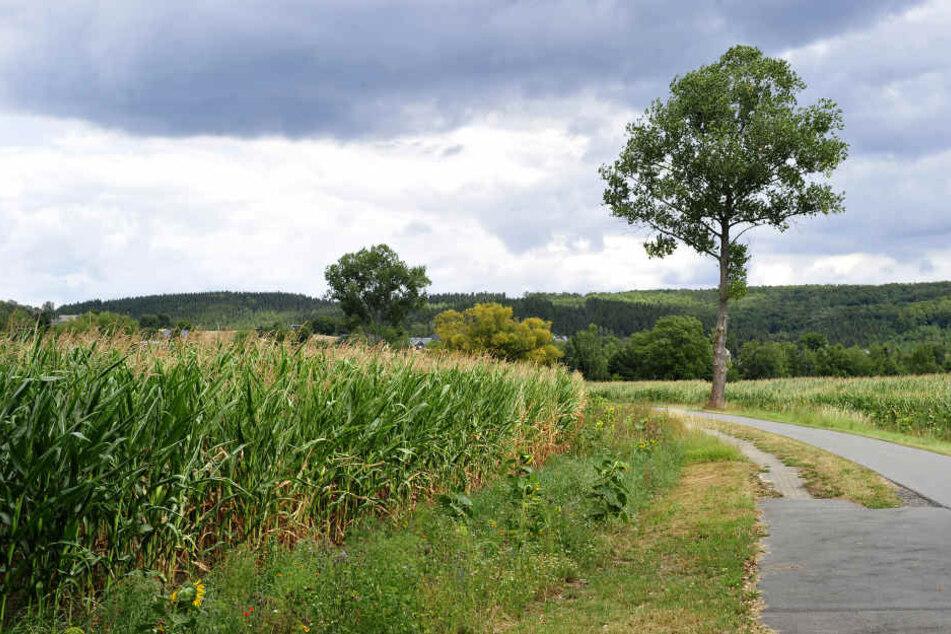 Mysteriöse Beobachtung im Erzgebirge: Wurde hier ein Kind entführt?
