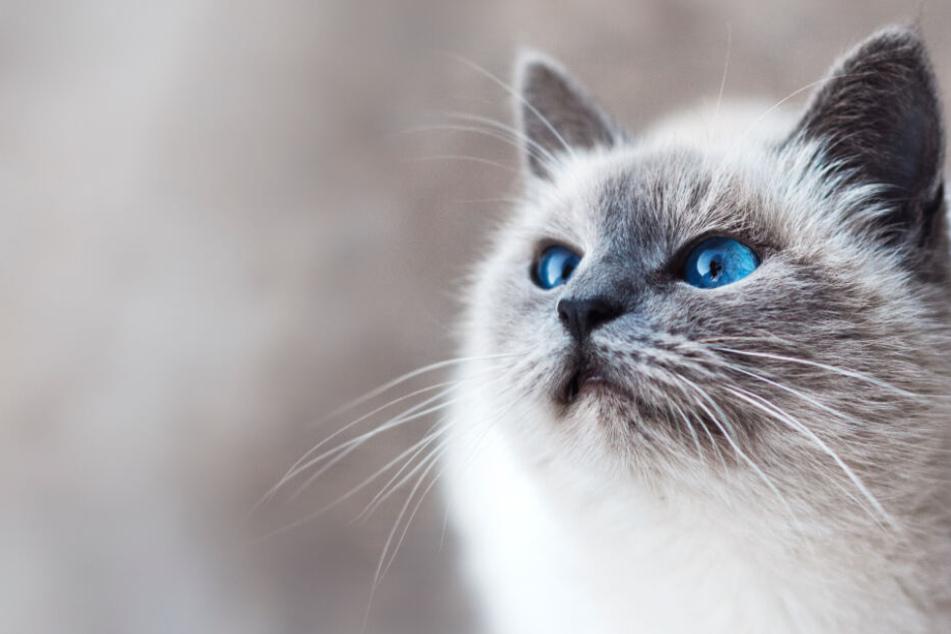 Designermöbel für Katzen: Sündhaft gut oder übertriebener Luxus?