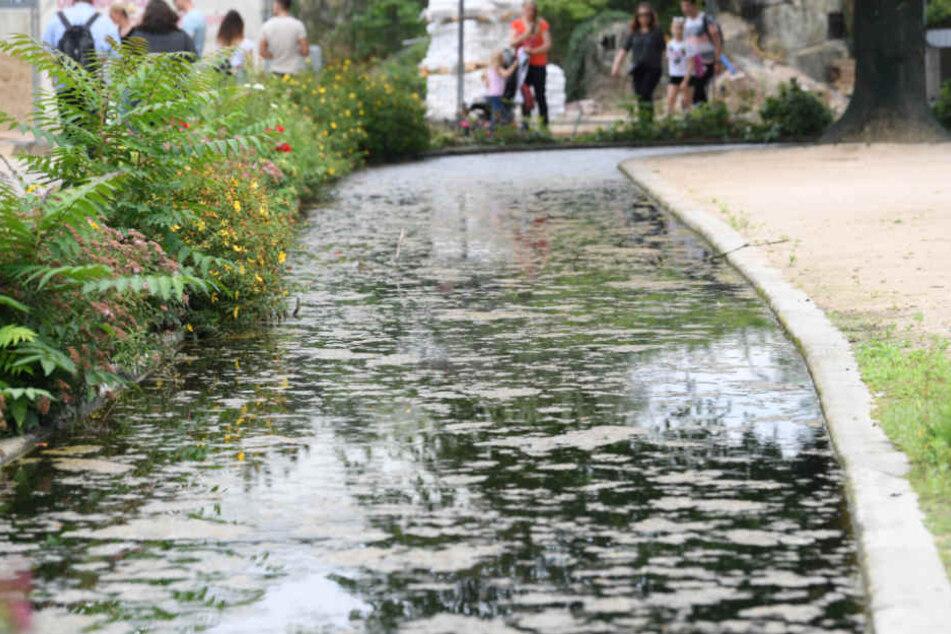 Der Wassergraben ist durch Pflanzen und ein Drahtseil vom Besucherweg getrennt.