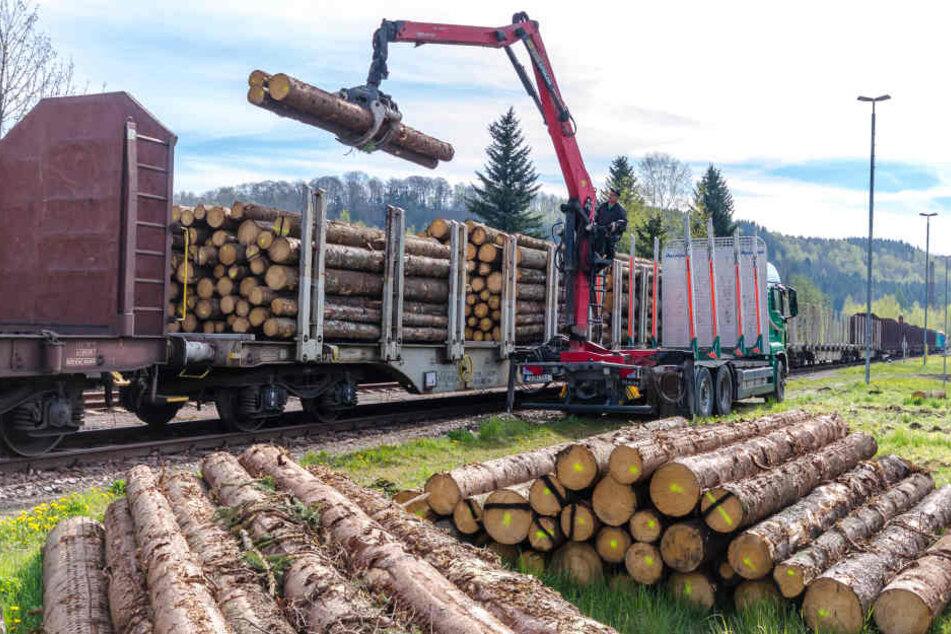 Nach zehn Jahren ist wieder ein Güterzug im Erzgebirge unterwegs. Der Holztransport ist 470 Meter lang, 1800 Tonnen schwer.