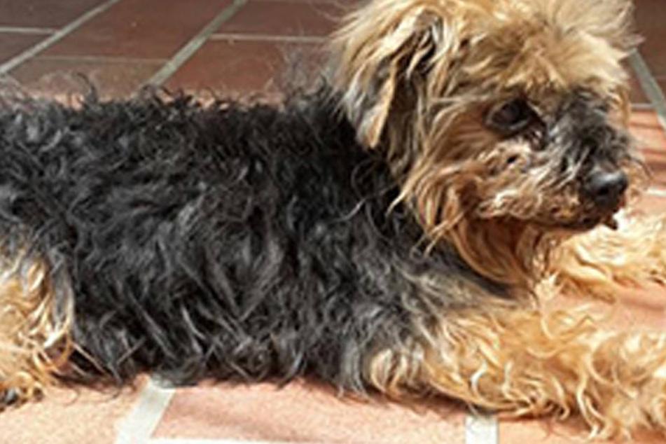 Diesen armen Hund rettete die Feuerwehr im April.