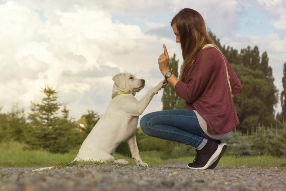 Die Körpersprache des Menschen beeinflusst den Hund enorm.
