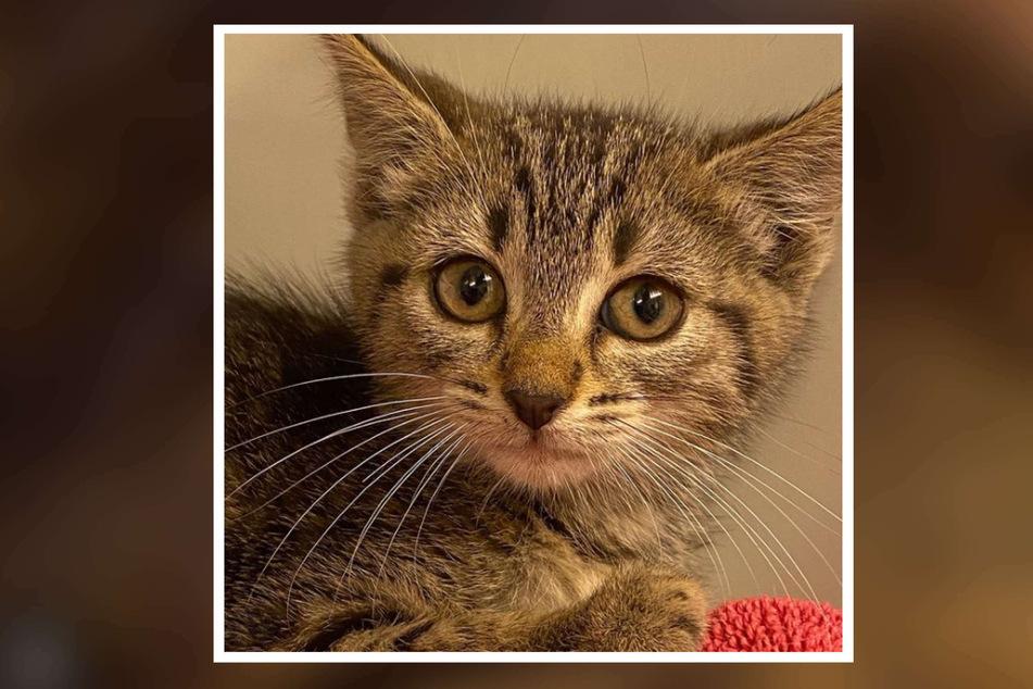 """Bei einer komplizierten Rettungsaktion mit zahlreichen Beteiligten ist Katze """"Trolli"""" gerettet worden."""