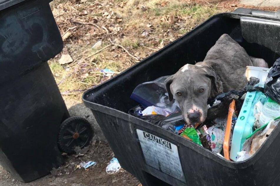 Hund in Mülltonne entsorgt: Wer hat ihm das nur angetan?