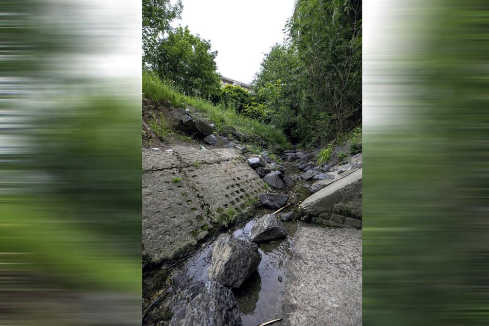 Der Gorbitzbach führt nur noch sehr wenig Wasser.