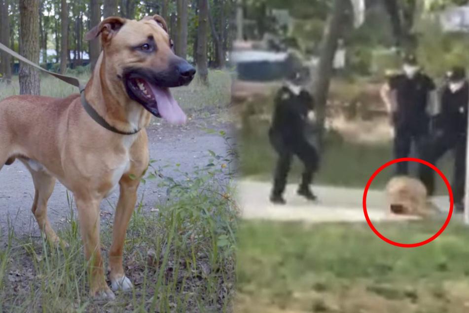 """Hund von Polizei niedergeschossen: """"Das Ende wird Euch schockieren"""""""