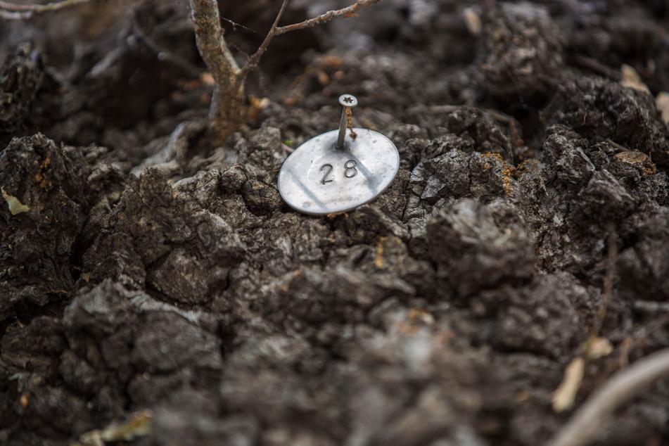 Noch immer haben die Bäume kleine Marken, längst erfolgt die Erfassung aber digital.