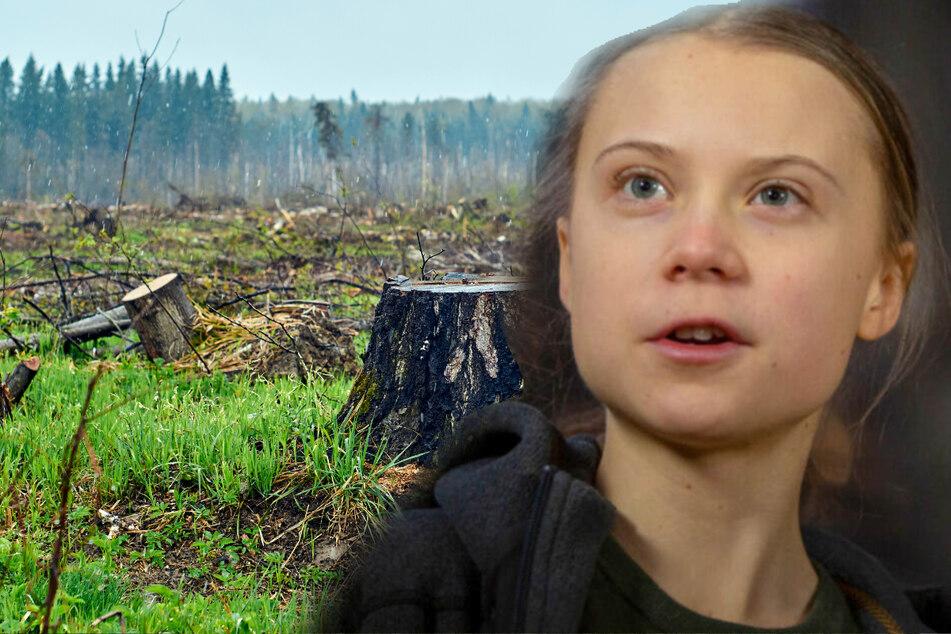 Greta Thunberg: Greta Thunberg warnt: Nur noch drei Prozent aller Ökosysteme sind intakt!